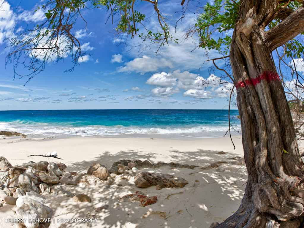 Caribbean Beach Desktop Wallpaper for Pinterest 1024x768