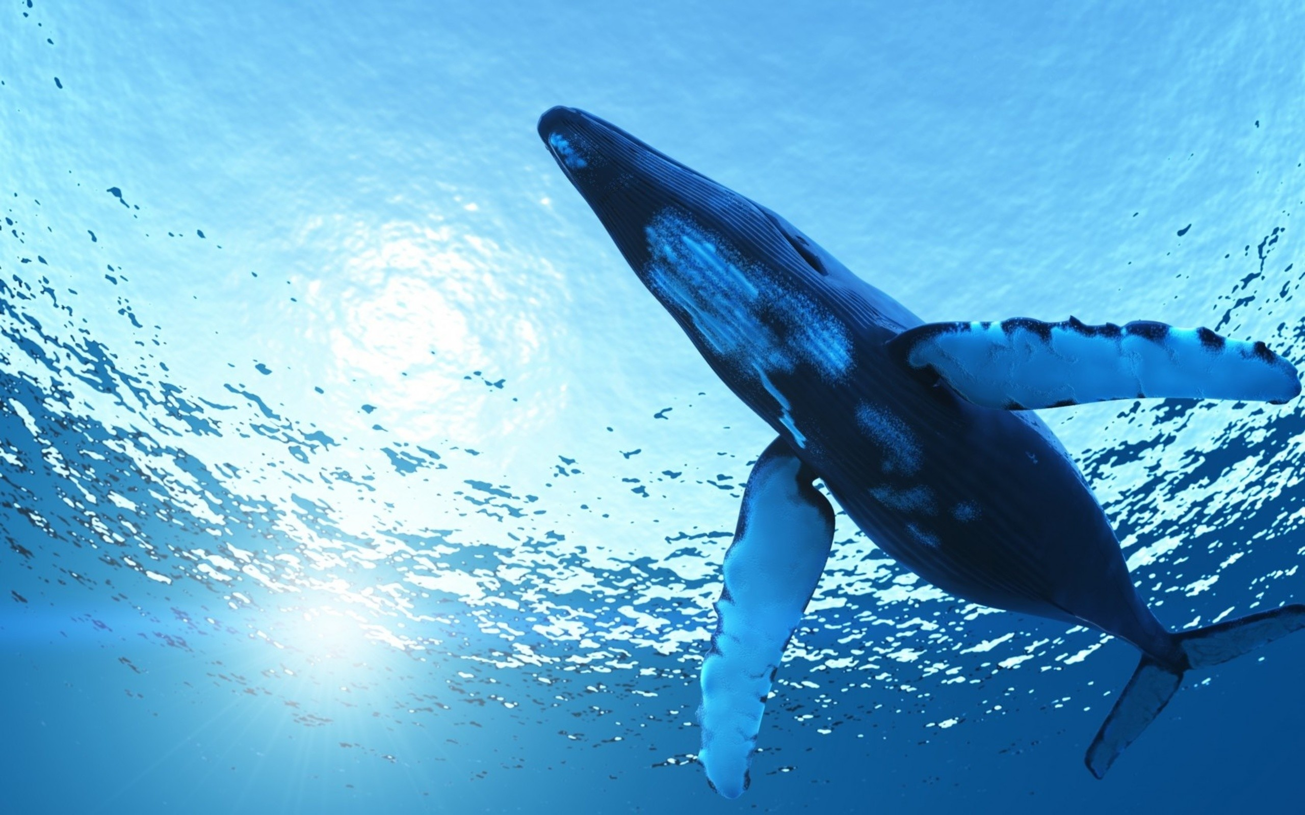 Whale Hd Wallpapers Backgrounds Wallpaper Data src   Whale 2560x1600