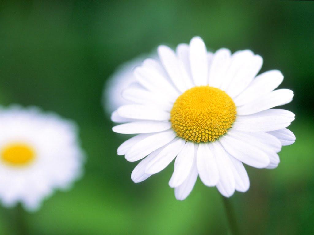 Beautiful Flowers Desktop Wallpaper 1024x768