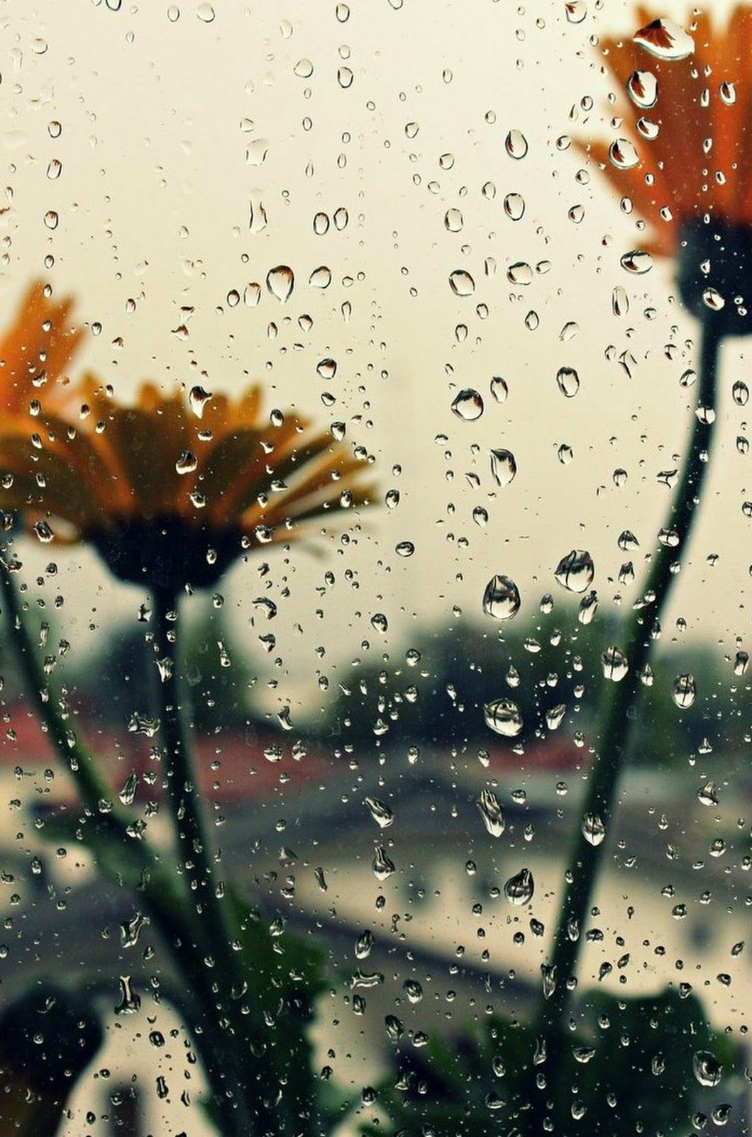 Sign in Rain wallpapers Rainy wallpaper Rain photography 1060x1604