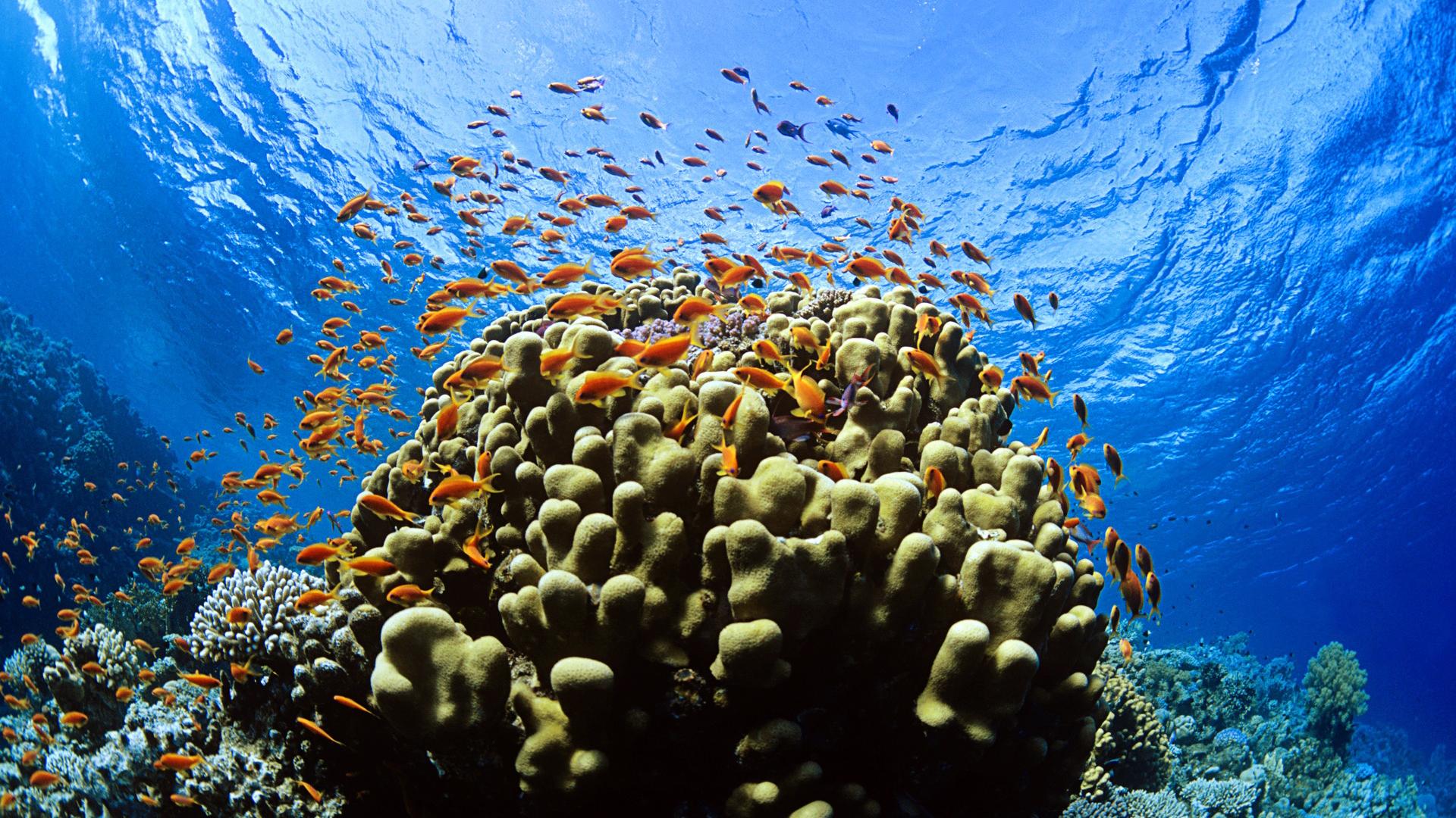 Hd wallpaper underwater - Homepage Underwater Underwater Hd Wallpaper 1920x1080 7