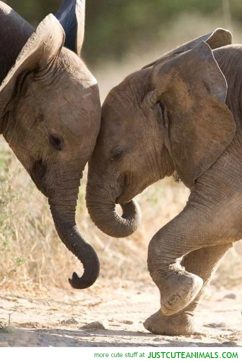 Cute baby elephant wallpaper wallpapersafari - Cute elephant pictures ...