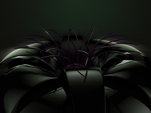 black flower with soft lighting Wallpaper Walltor 640x480