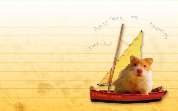 hamster boat swim desktop wallpapers 1920x1200 HQ photo images HD 600x375