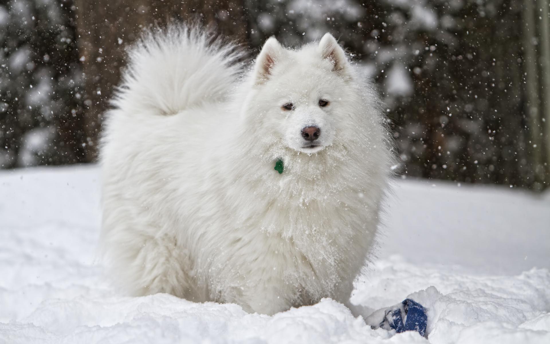 Dog snow white winter wallpaper 1920x1200 75100 WallpaperUP 1920x1200
