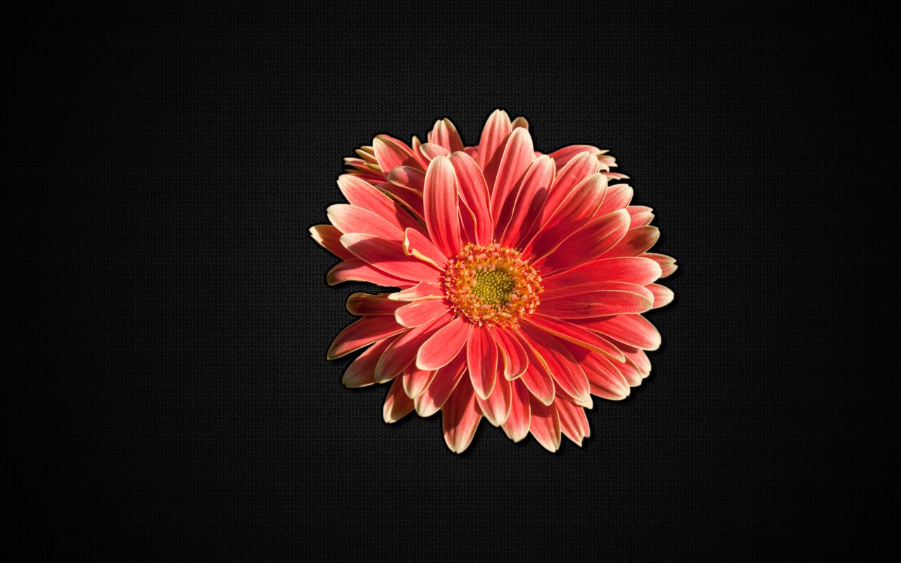 gerbera flower pot hd wallpapers a My Ideas Pinterest