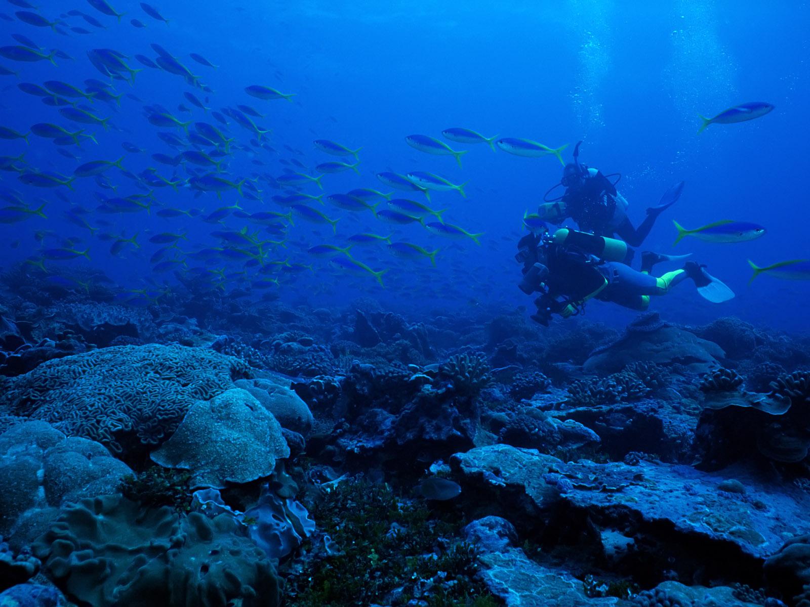 Underwater Wallpapers High Definition - WallpaperSafari