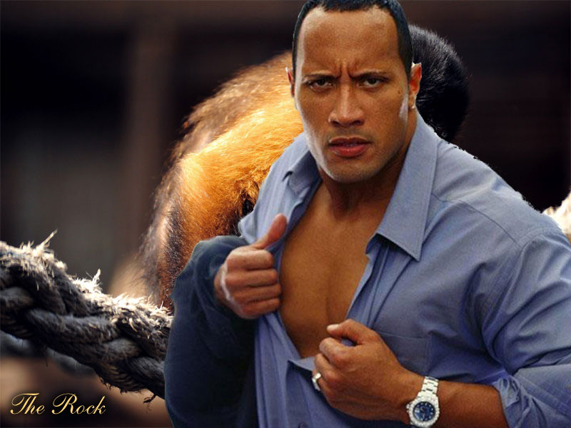 WWE The Rock HD Wallpaper Free Download 3 View Image Of