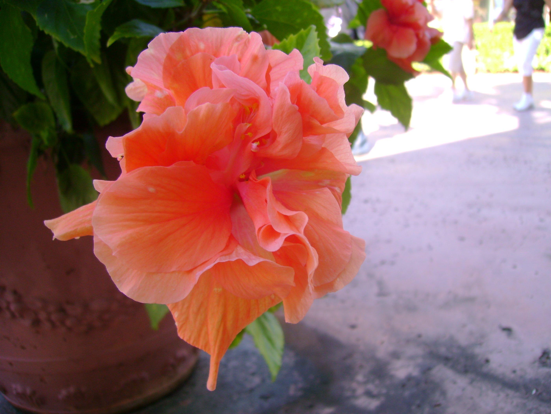 tropical flower wallpaper   wwwhigh definition wallpapercom 2816x2112