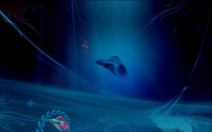 Windows 8 Beta Fish Wallpaper by makavelii on deviantART 900x563