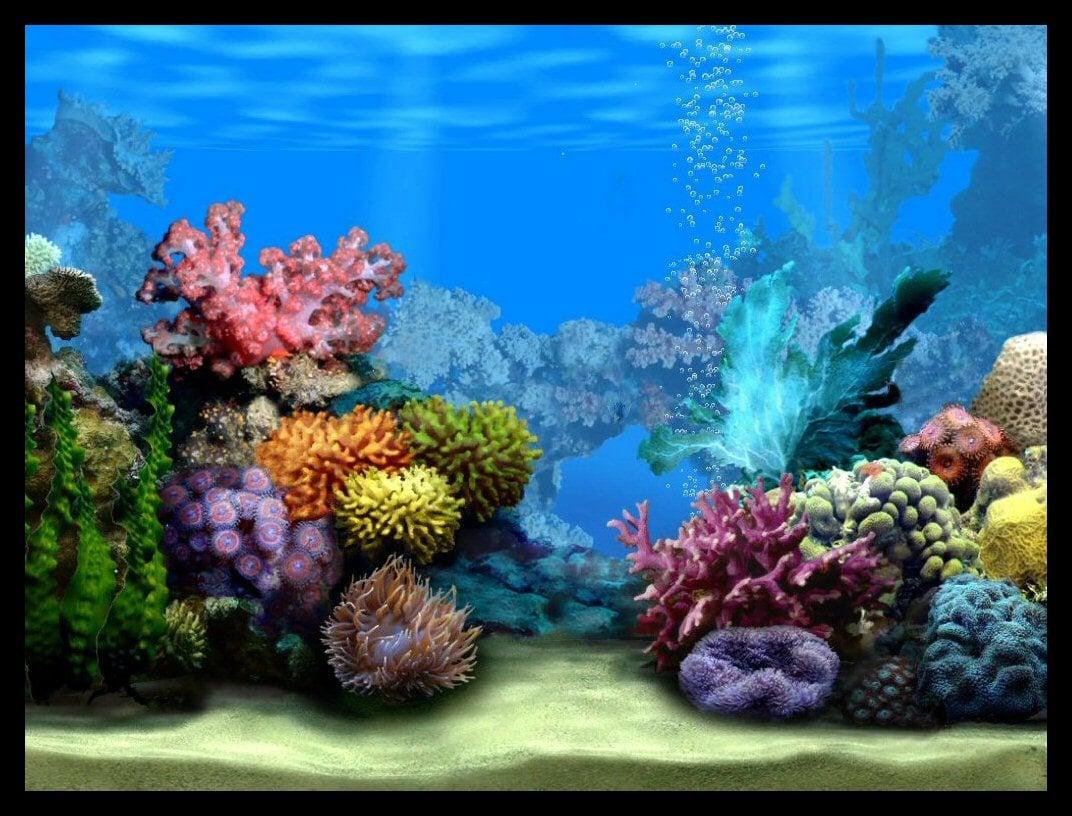 Fish tank wallpaper wallpapersafari for Fish for fish tank