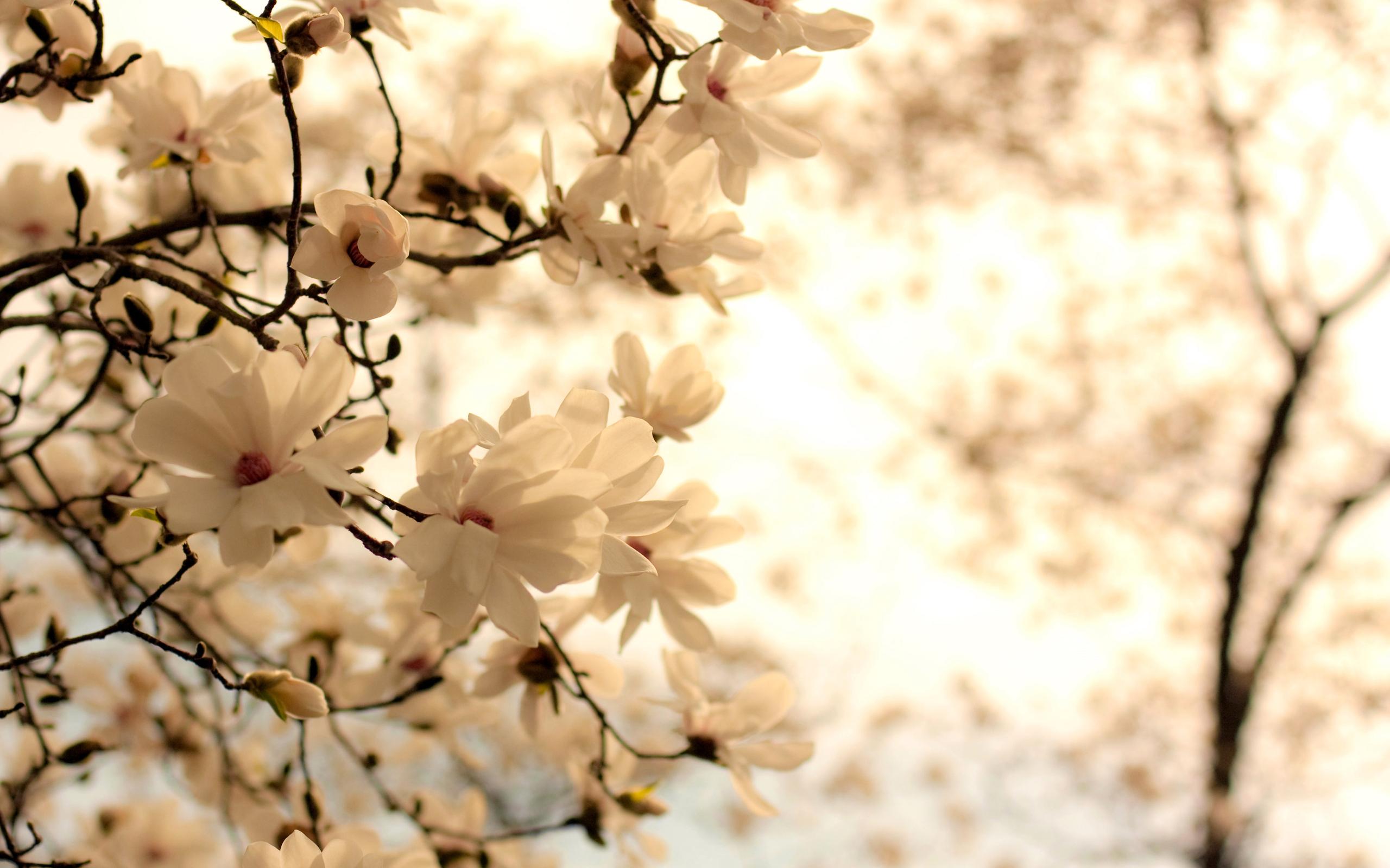 White Flowers Random Wallpaper 22016740 Fanpop