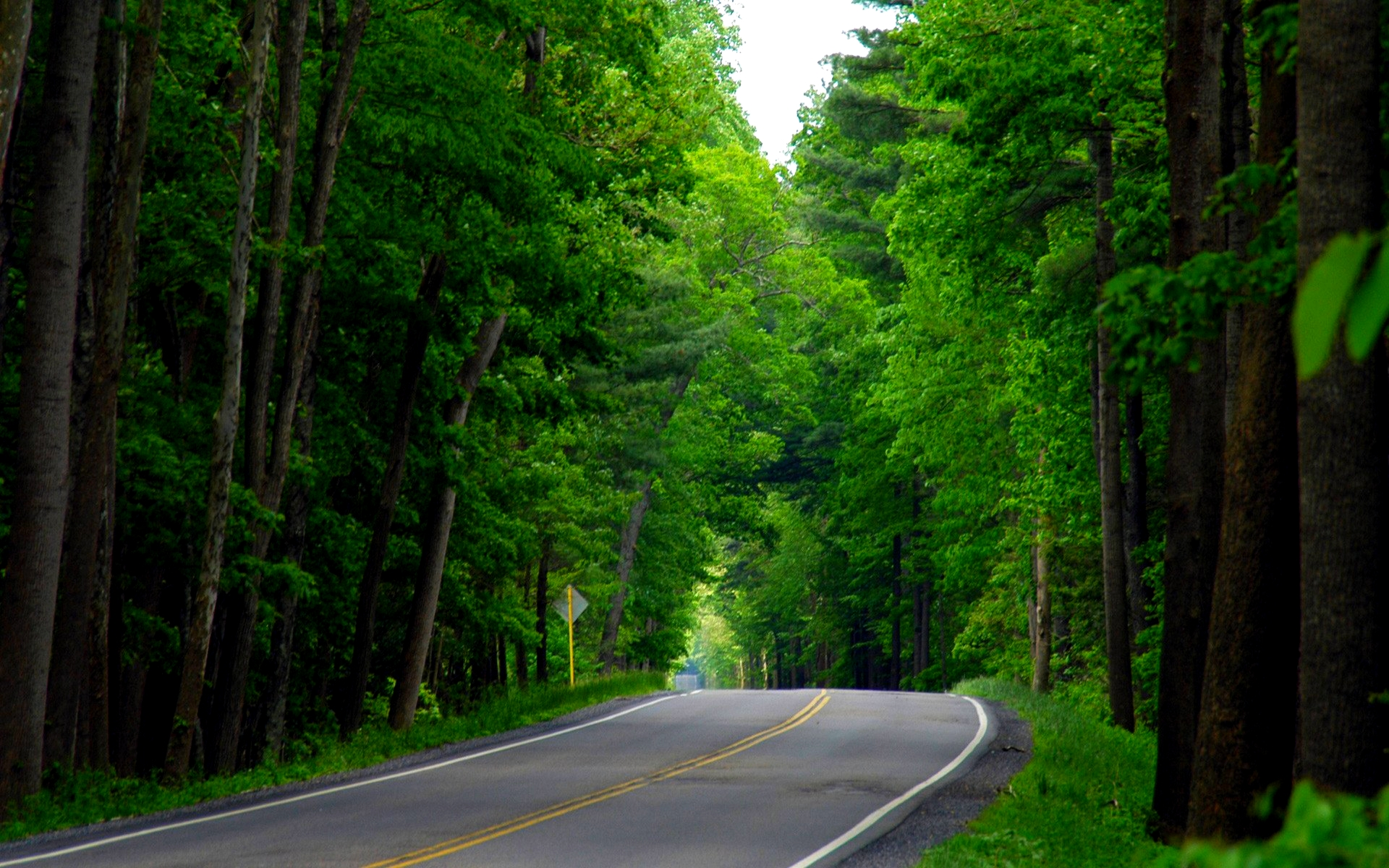 Green Forest Background wallpaper Green Forest Background hd 1920x1200