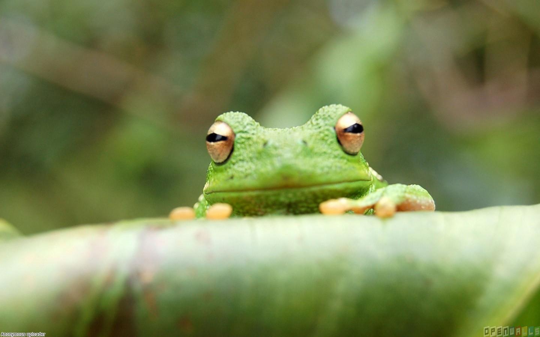 Little cute frog wallpaper 10945   Open Walls 1440x900