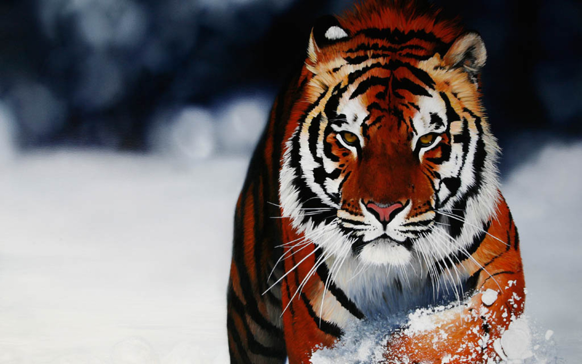 backgrounds photos animal backgrounds hd wallpapers animal backgrounds 1920x1200