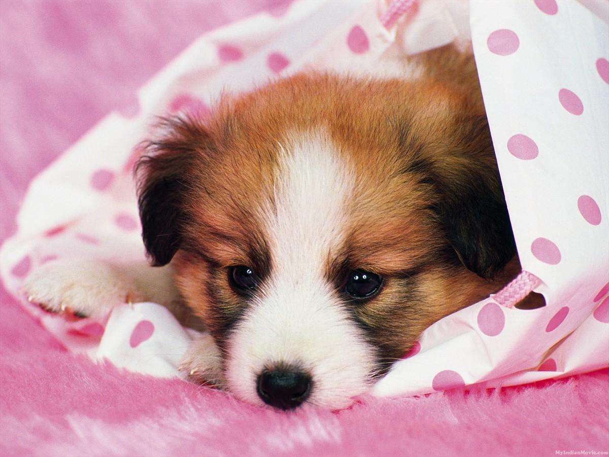 Puppy Dogs Hd Desktop Wallpapers Gallery Puppy Dogs Hd Desktop 1200x900