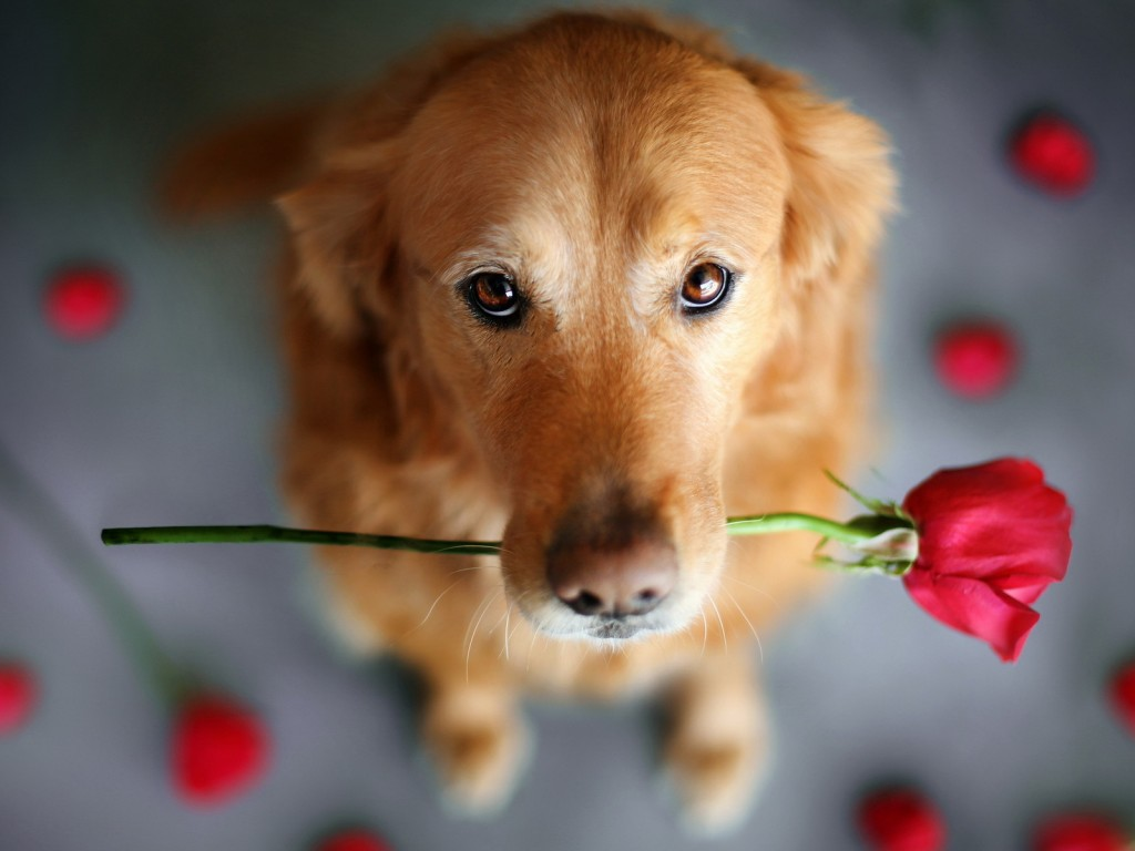 Cute Dog   Dogs Wallpaper 33698322 1024x768