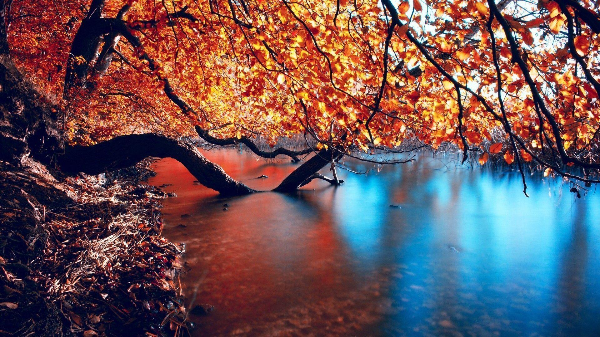 Autumn HD Wallpapers 1920x1080