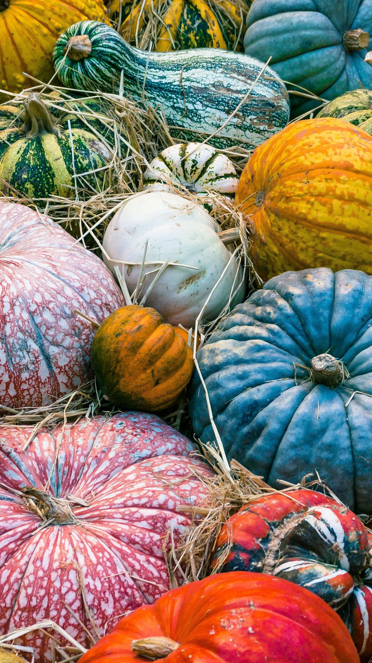 Colorful Pumpkins Autumn Wallpaper   iPhone Android Desktop 1440x2560