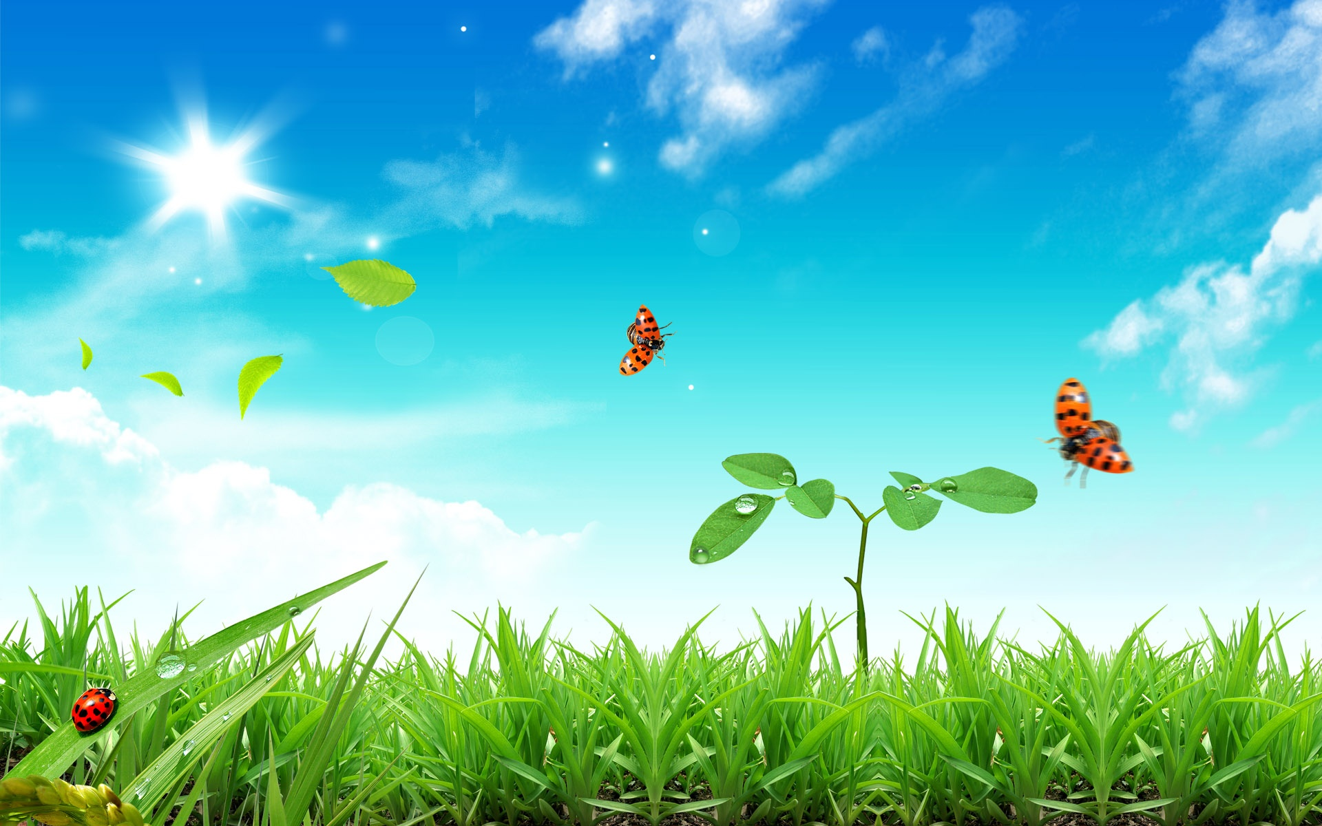 Fresh Life Wallpapers in jpg format for download 1920x1200