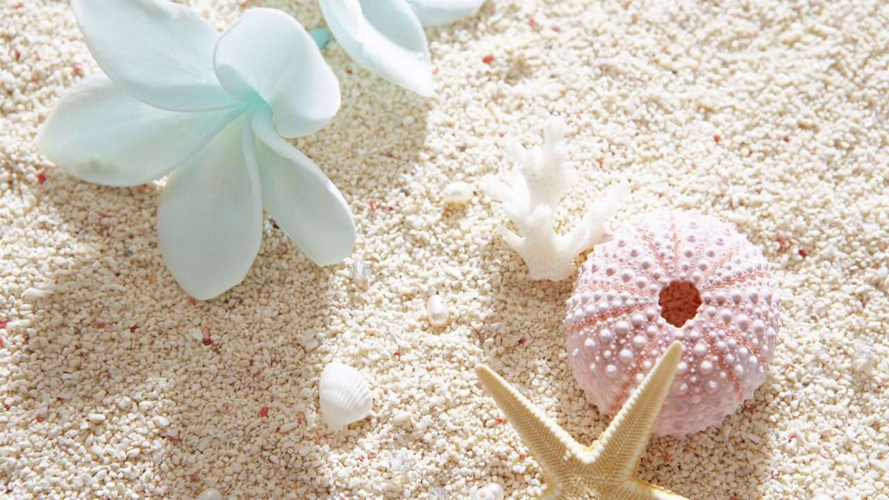 White Plumeria and Sea Shells widescreen wallpaper Wide 1280x720