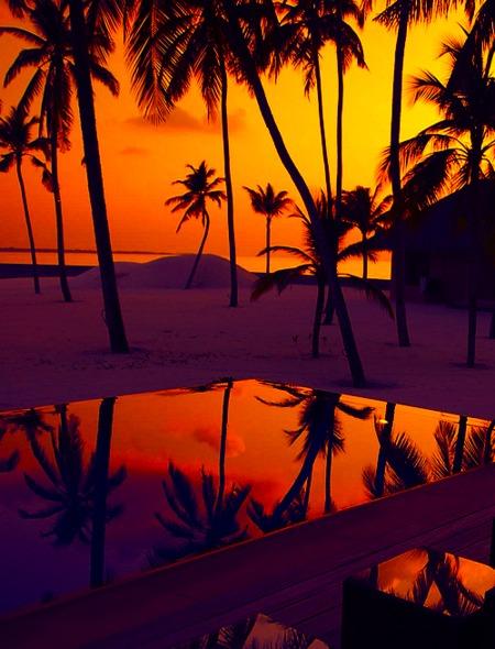 beach sunset previewjpg1448226176 450x590