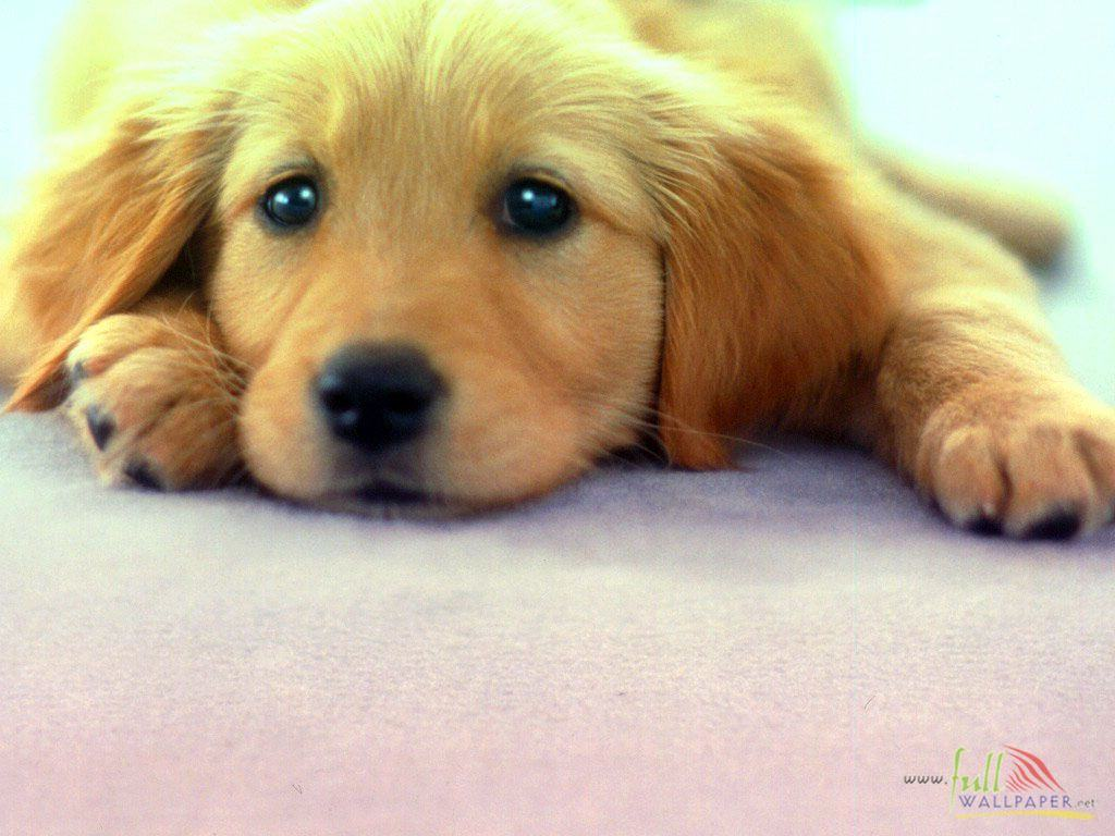 wallpapers pets wallpapers leave a reply cancel reply name email 1024x768