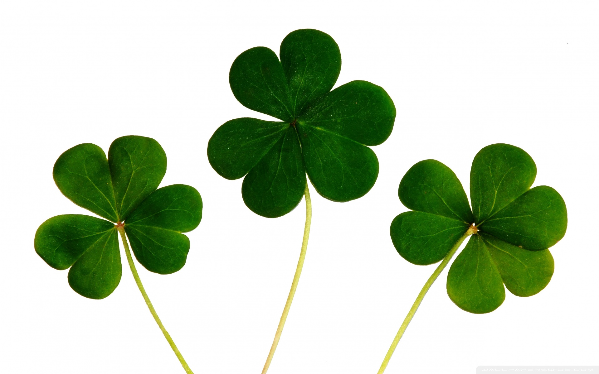 Download Four Leaf Clover Wallpapers HD 1920x1200