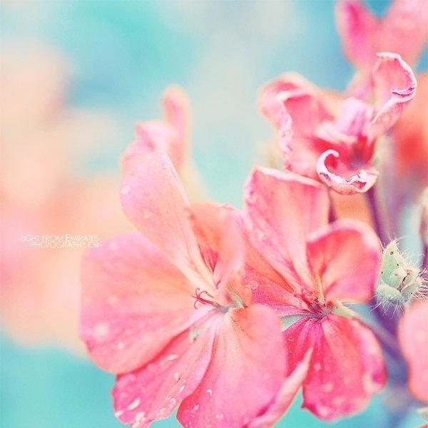 light pink flower wallpaper - photo #31