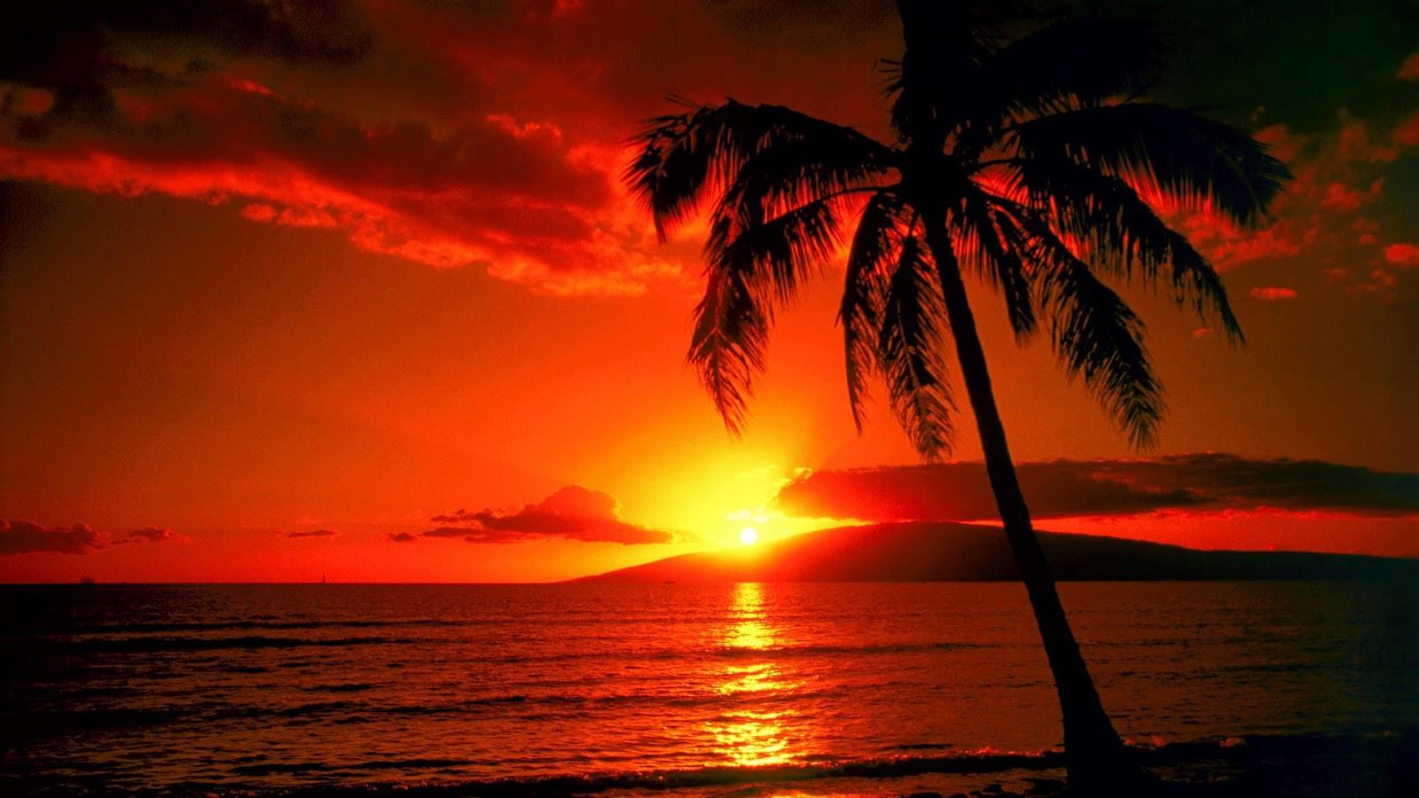 Palm Tree Sunset Wallpaper 1600x900