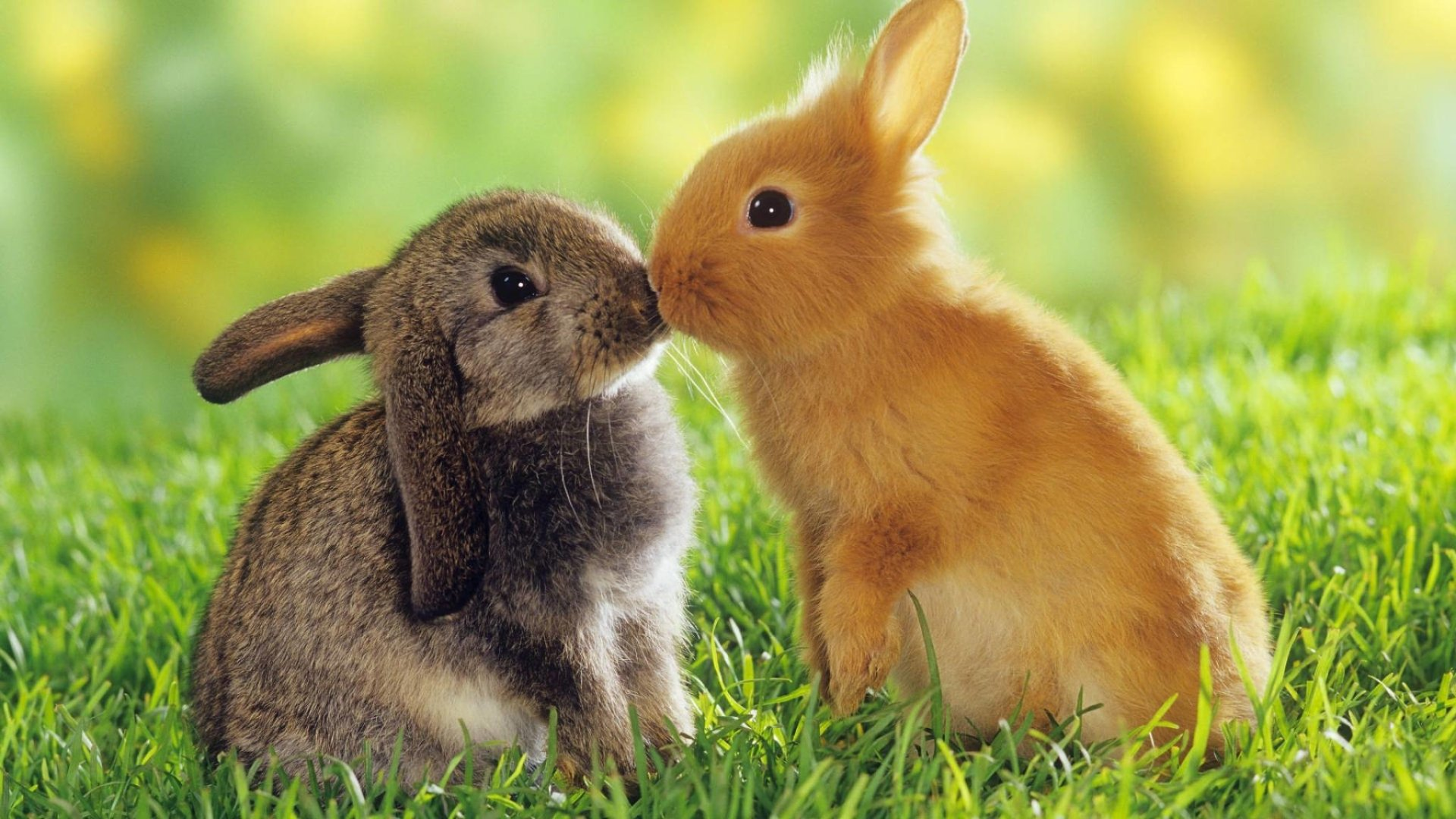 273 Rabbit HD Wallpapers Background Images 1920x1080