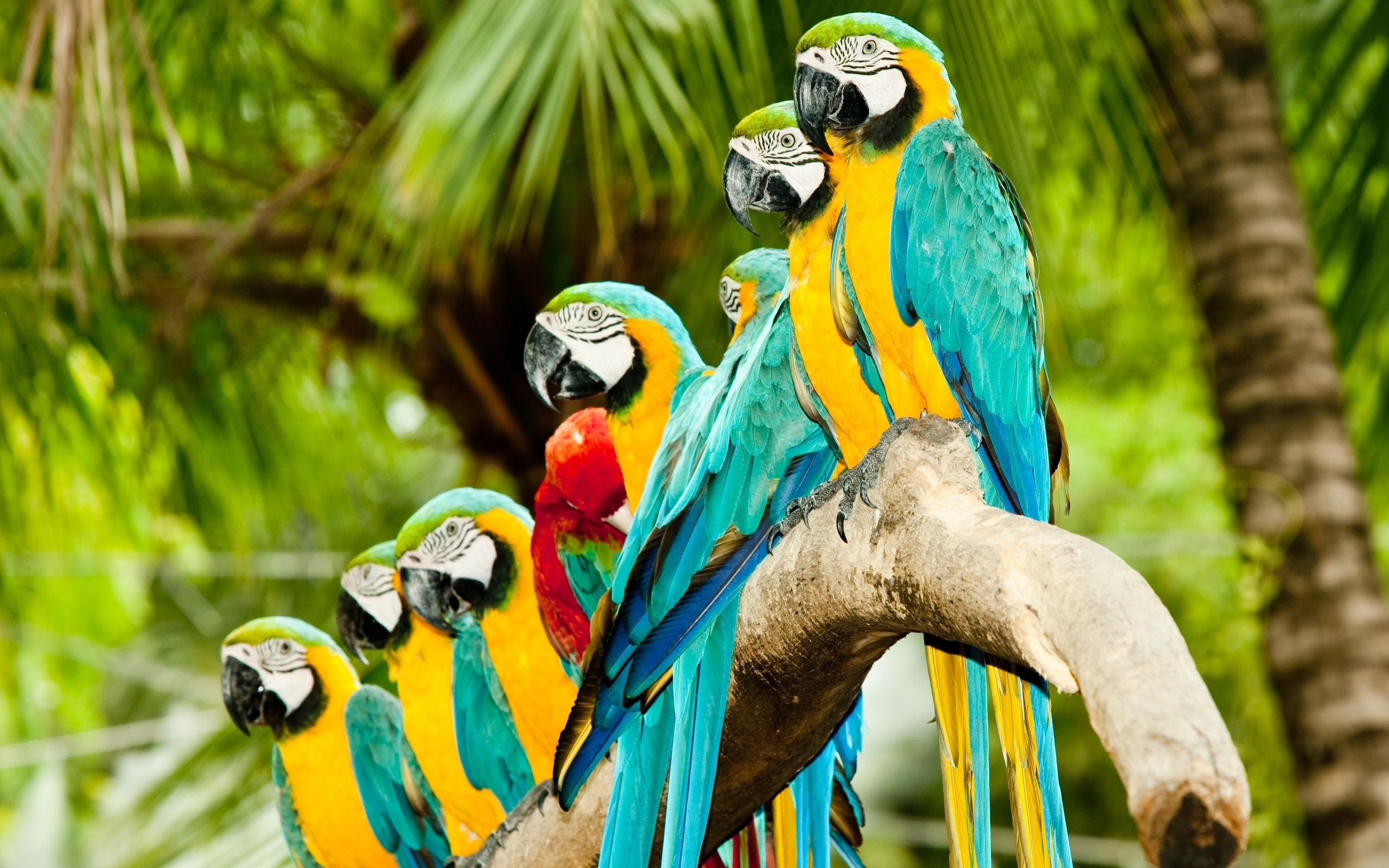 Image detail for  Colourful Parrots HD Wallpaper Birds HD 2560x1600