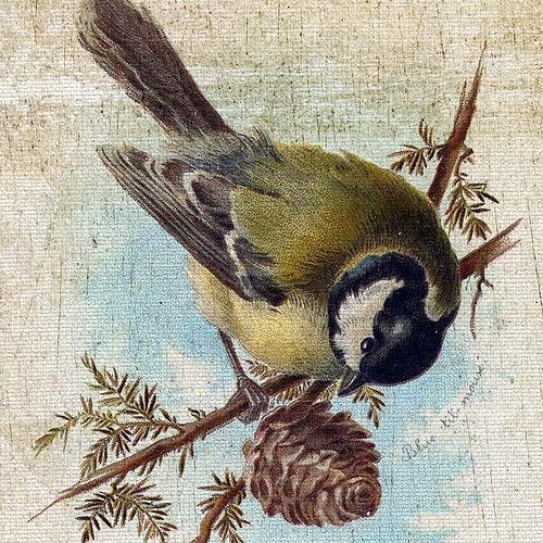 Vintage Bird Flickr   Photo Sharing 500x500