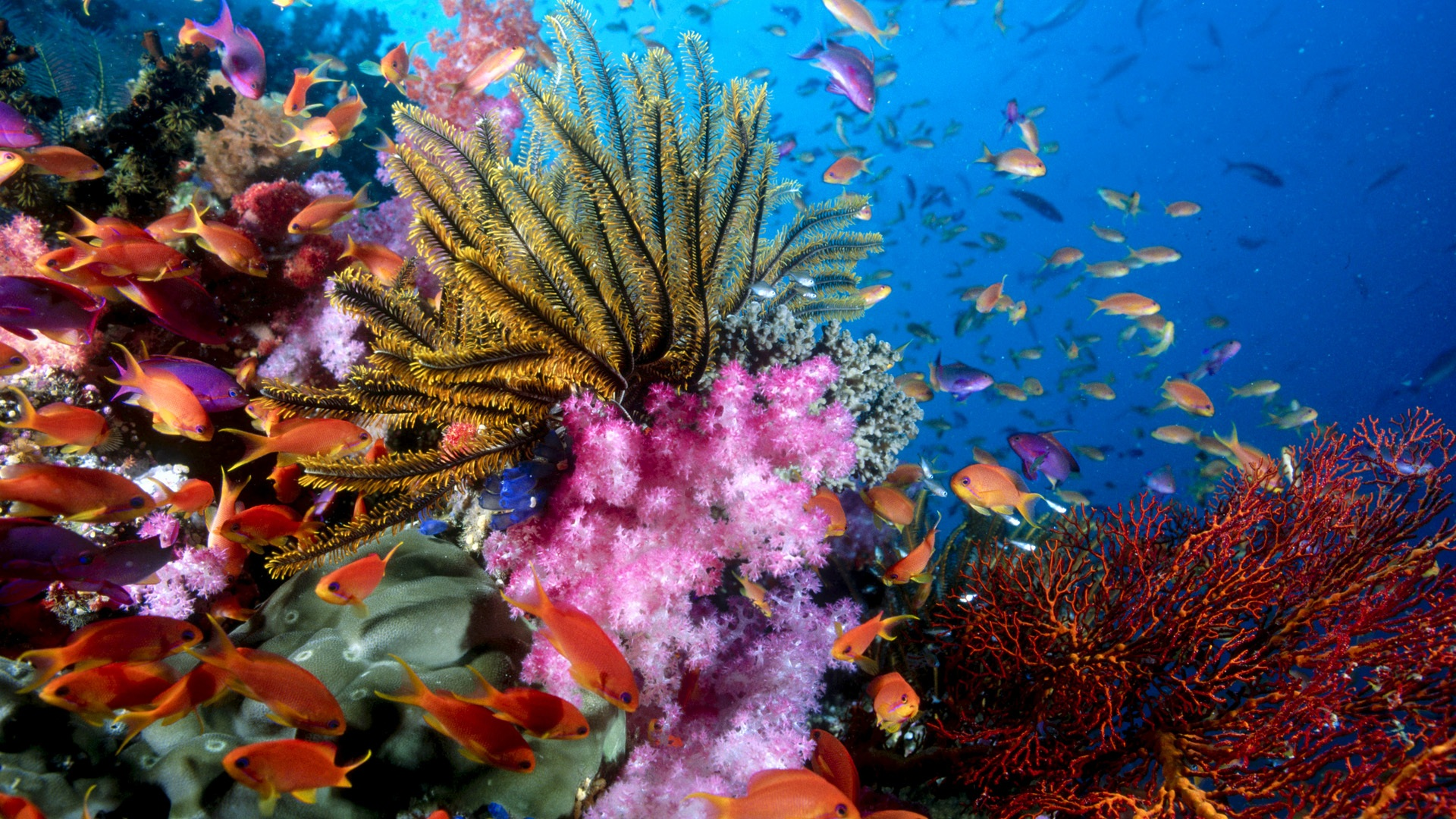Colorful sea fish Wallpapers Backgrounds HD Desktop Wallpapers 1920x1080