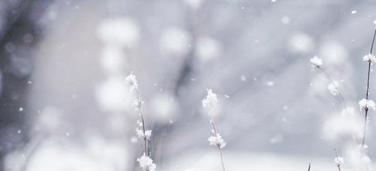 Winter Wonderland Background Free Winter Wonderland Photo Download