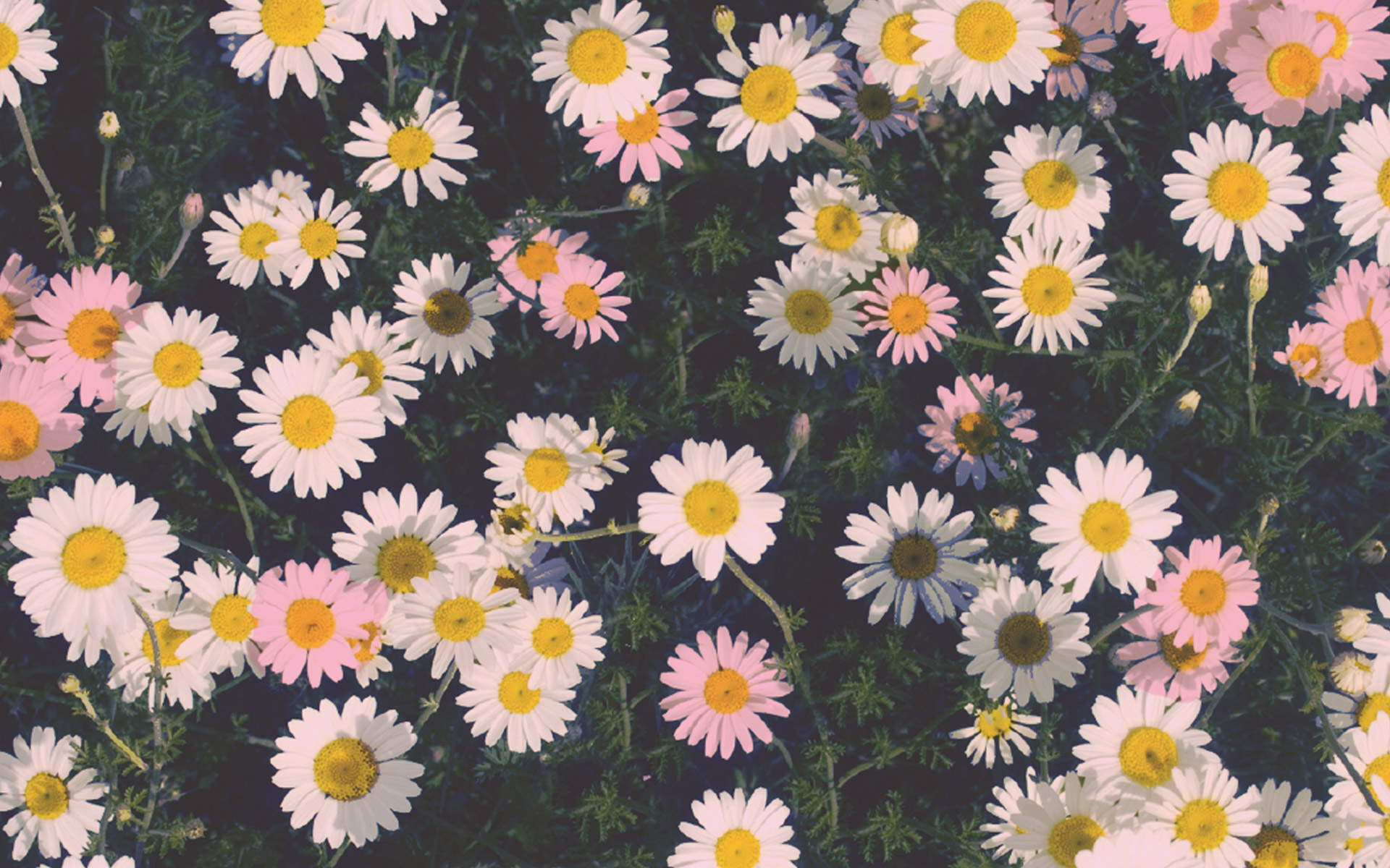 spring flower wallpaper iphone