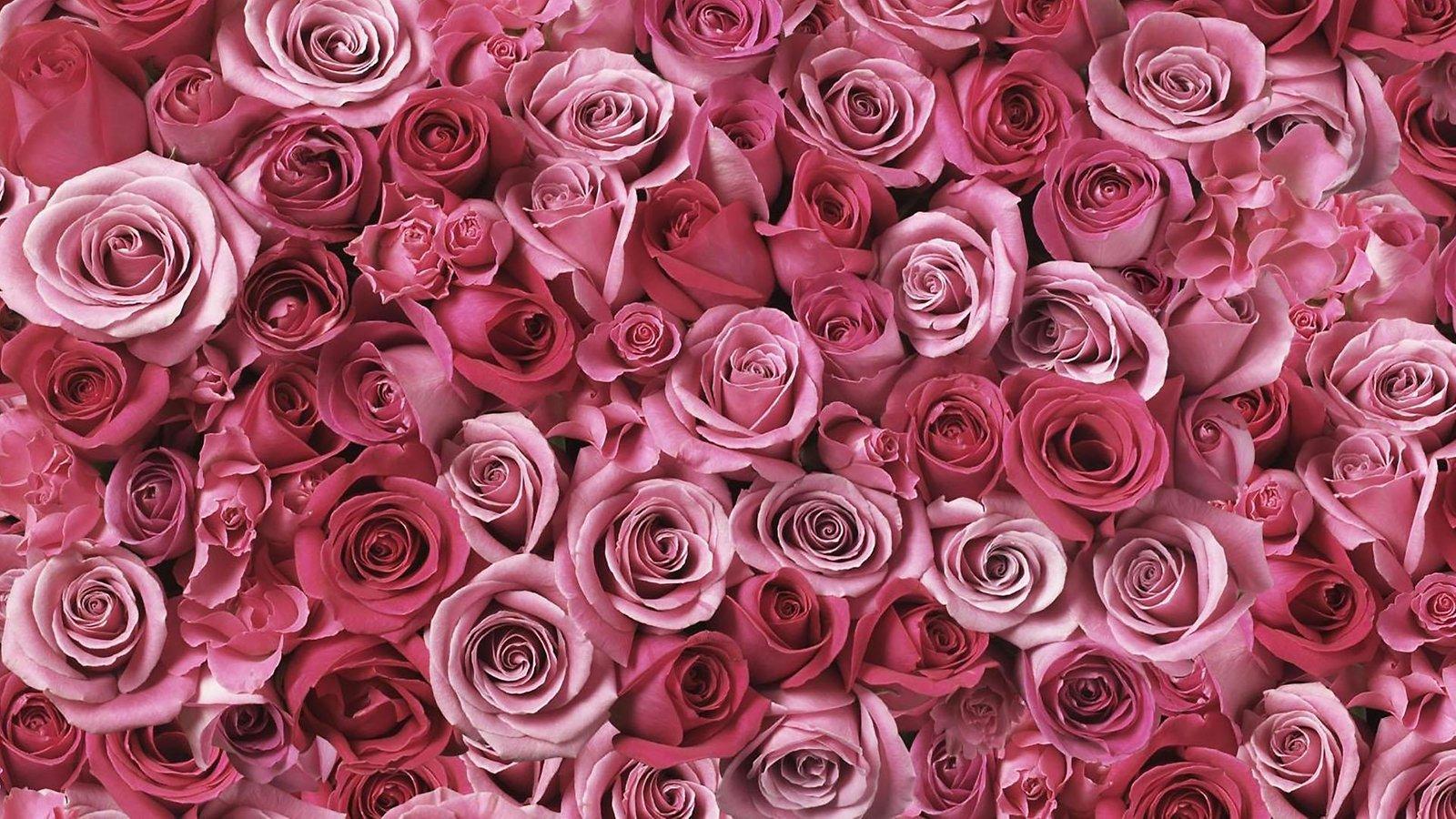 Delle rose Sfondo Animato 1600x900