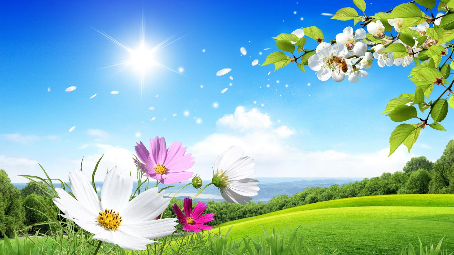 1920x1080 beautiful Summer and flowers scenery wallpaper 1920x1080