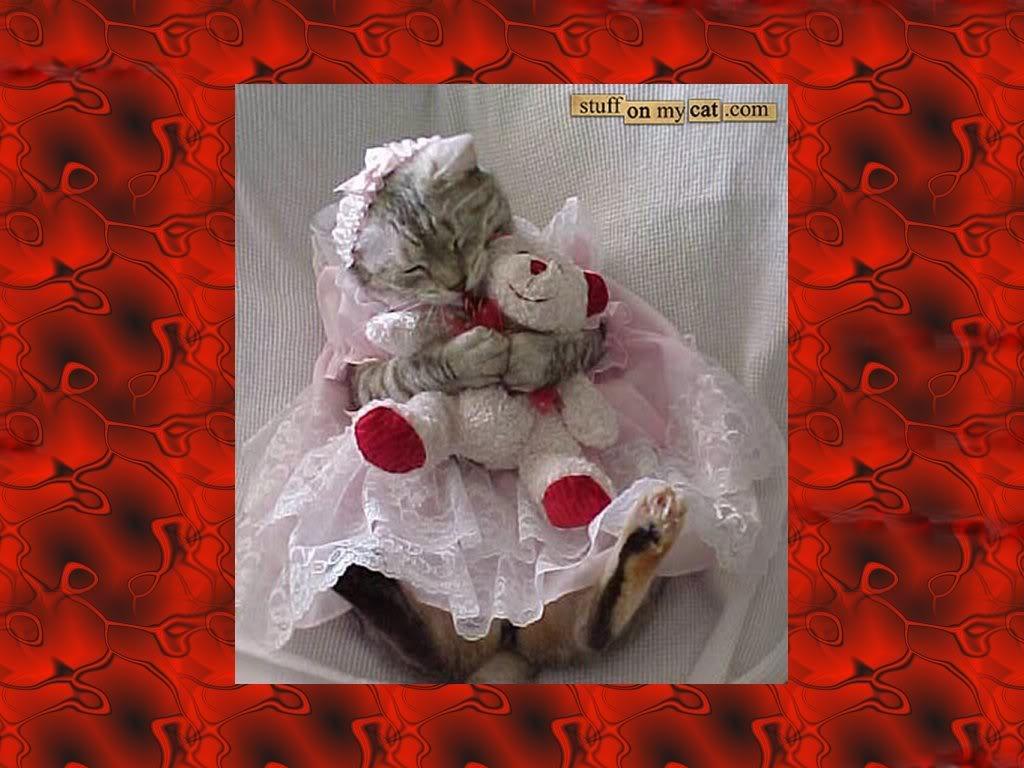 Valentine Kitty Wallpaper Valentine Kitty Desktop Background 1024x768