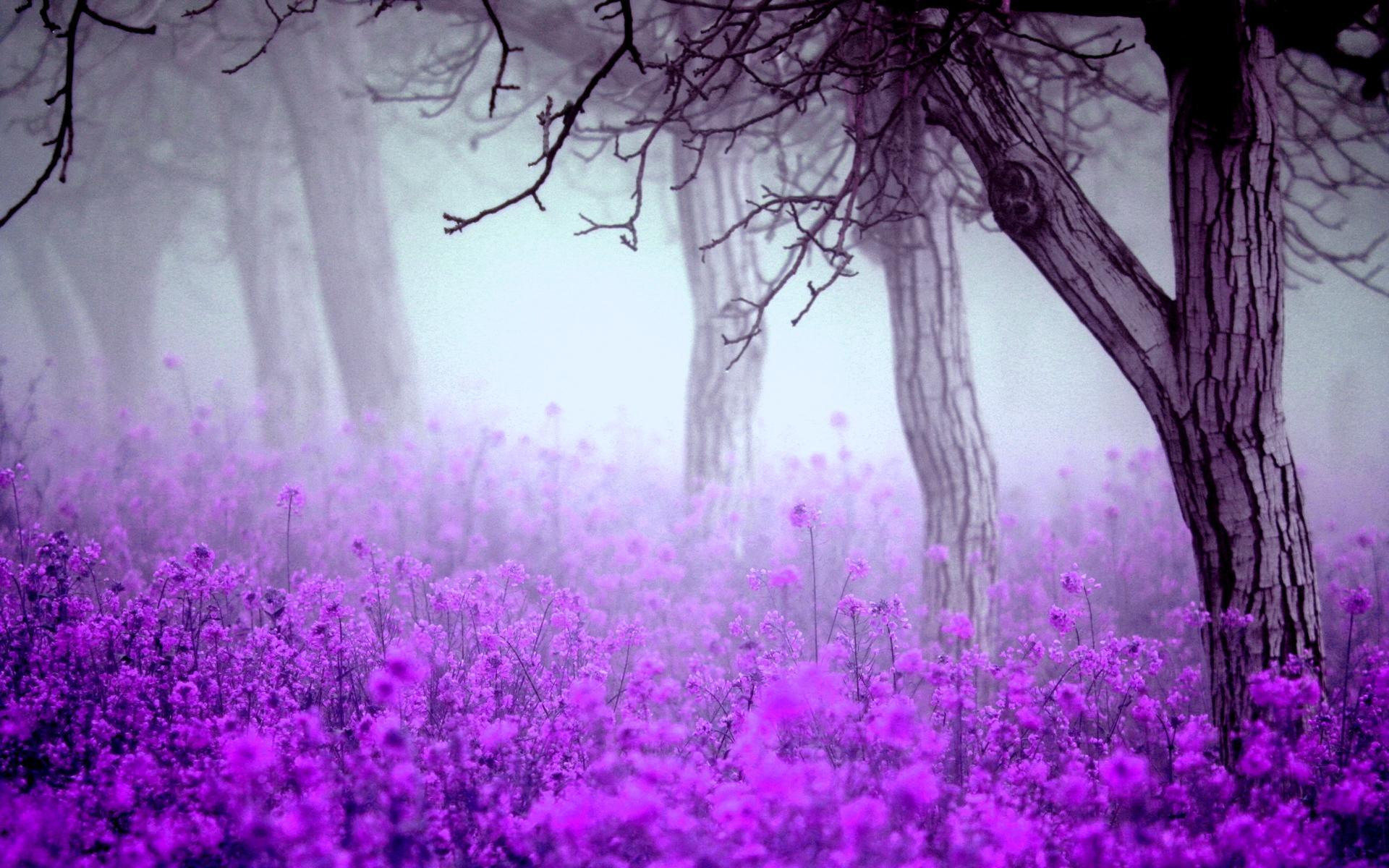 High Quality Fantastic Purple Flowers Wallpaper Full HD Pictures 1920x1200