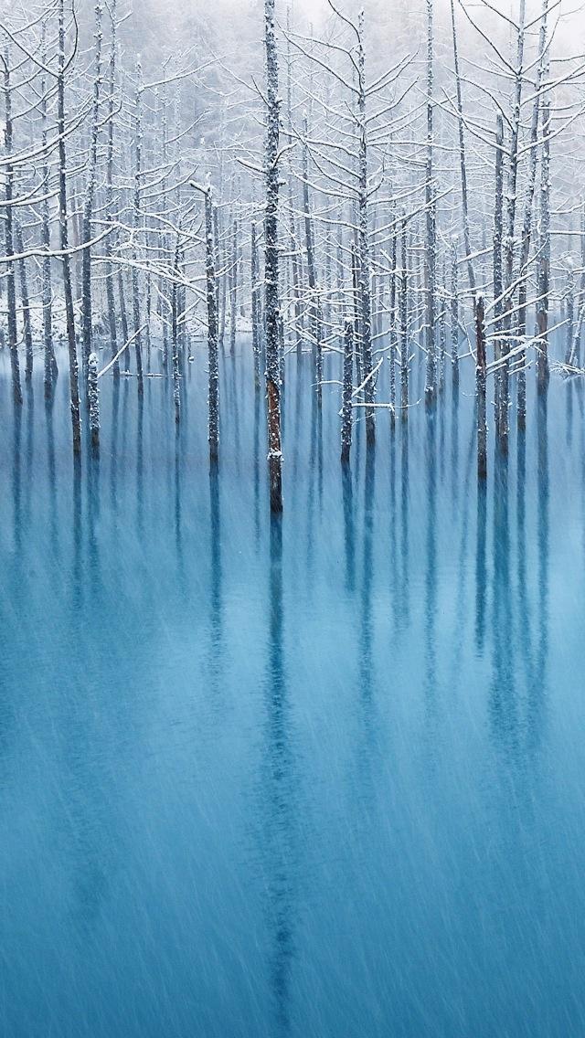 Winter Trees 640x1136
