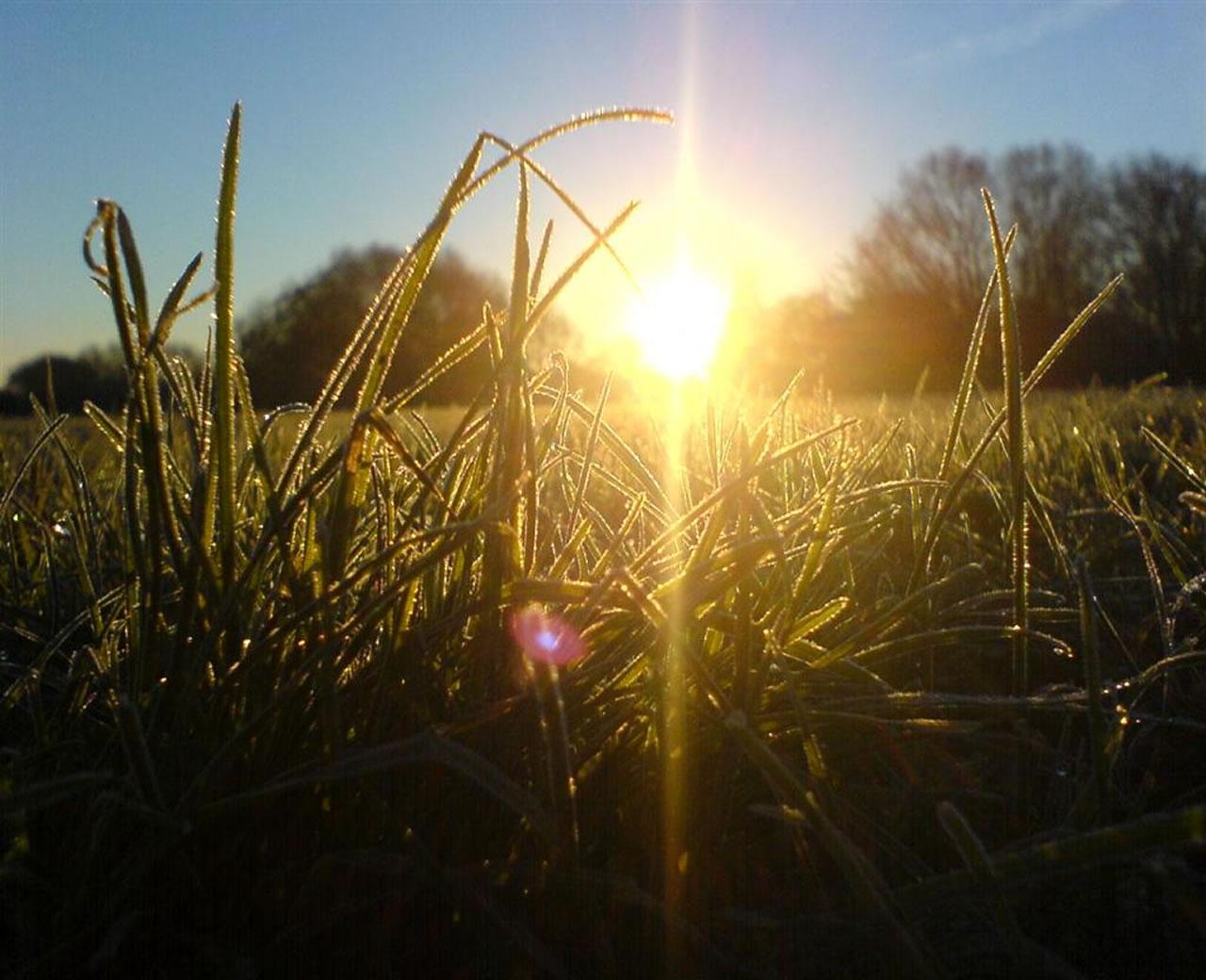 winter solstice grass dew ground 1280x1040