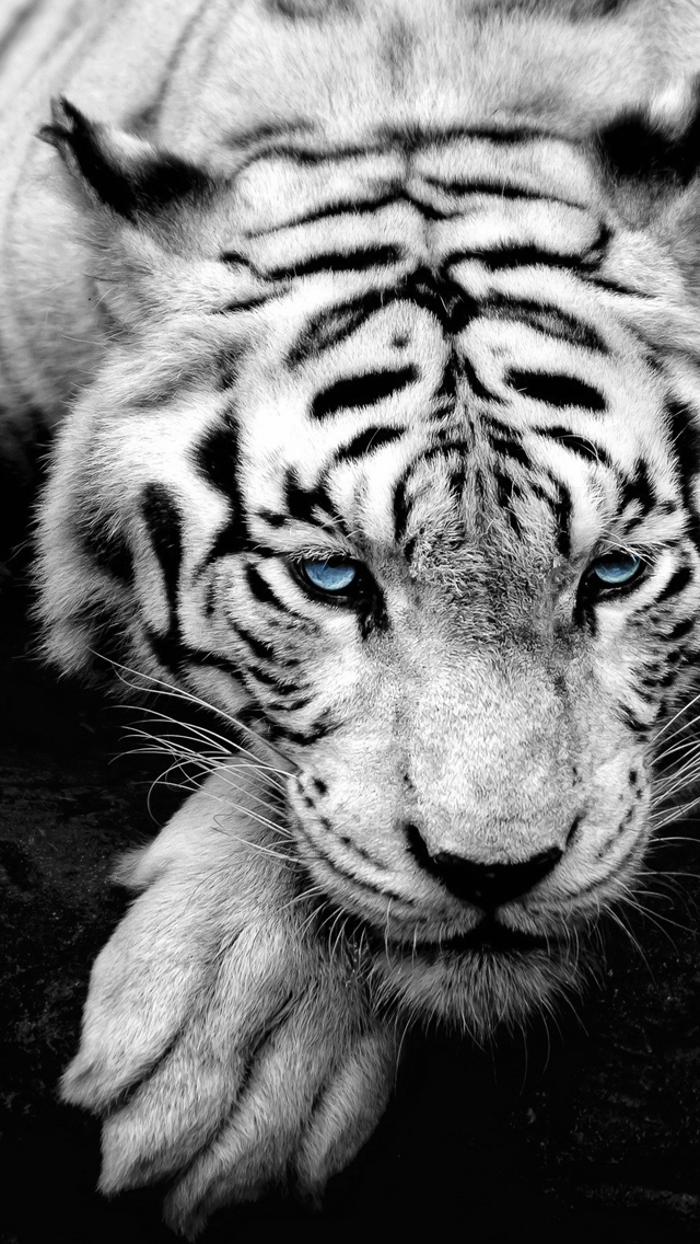White tiger   Best iPhone 5s wallpapers 640x1136