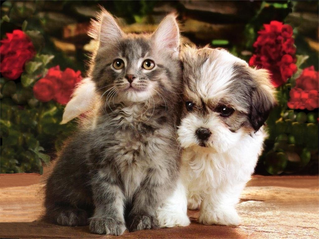Kitten and Puppy hd Wallpaper 1024x768