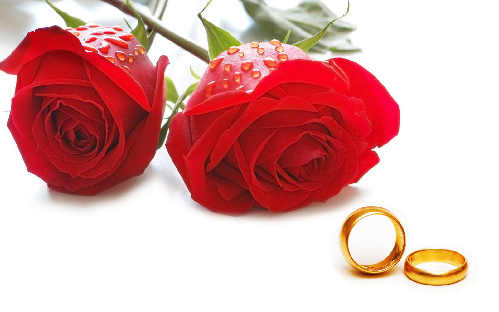 Red Rose Flower Wallpaper Awesome Love