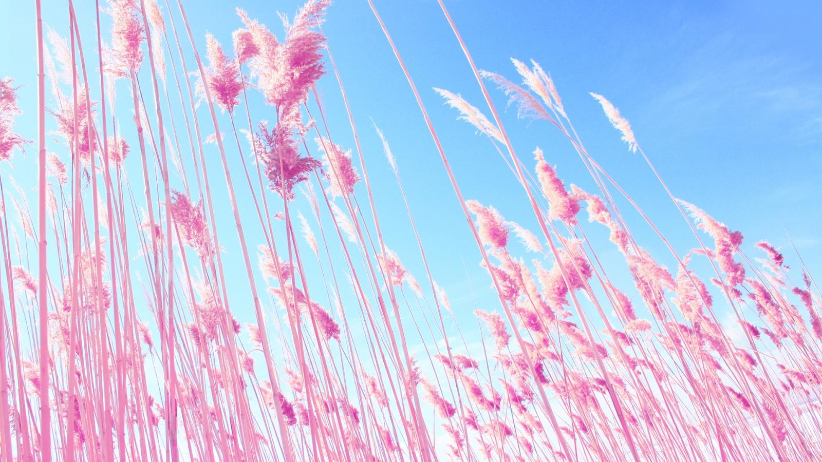 Pink Desktop Wallpaper Themes  WallpaperSafari