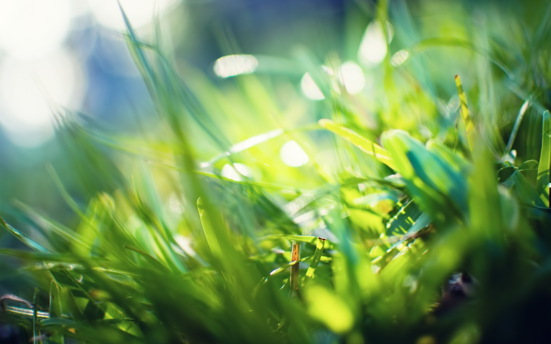wallpaper bokeh grass macbook mac wallpapers retina 2880x1800