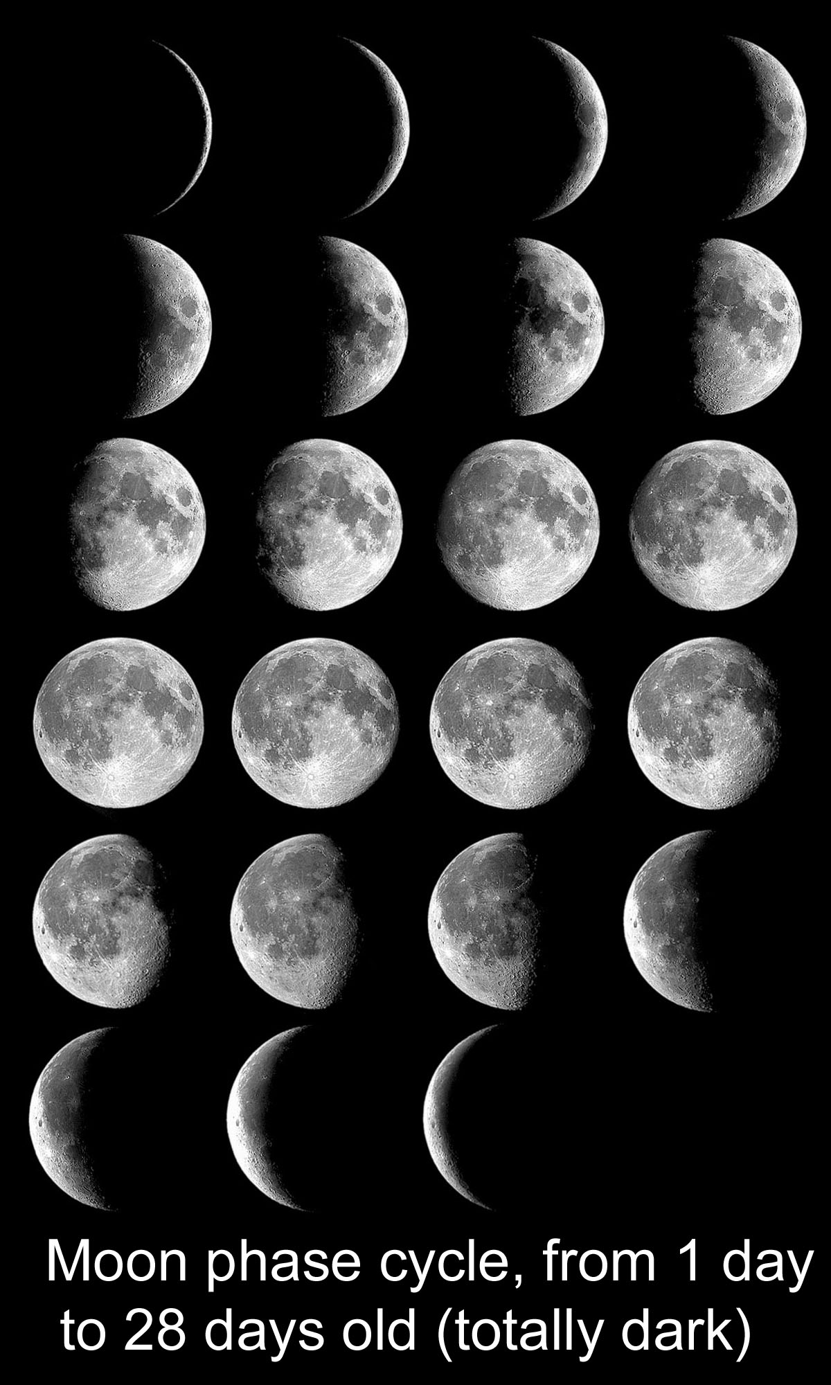 Montage of photos of Moon each night for one 28 day cycle 1200x2000