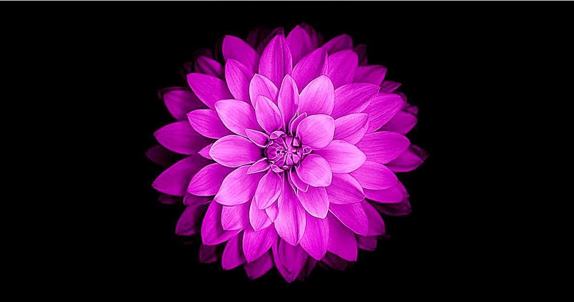 IOS 8 Flower Wallpaper 25344 Hi Resolution Best JPG 1183x624