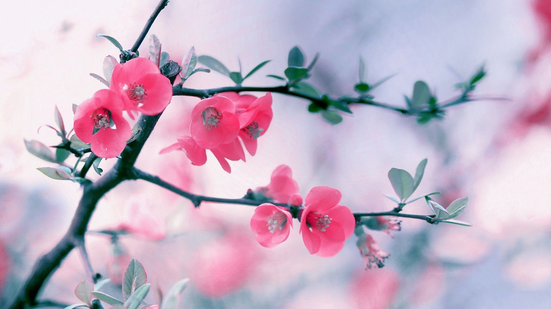 Cute Spring Wallpaper HD Spring wallpaper Flower backgrounds 1920x1080